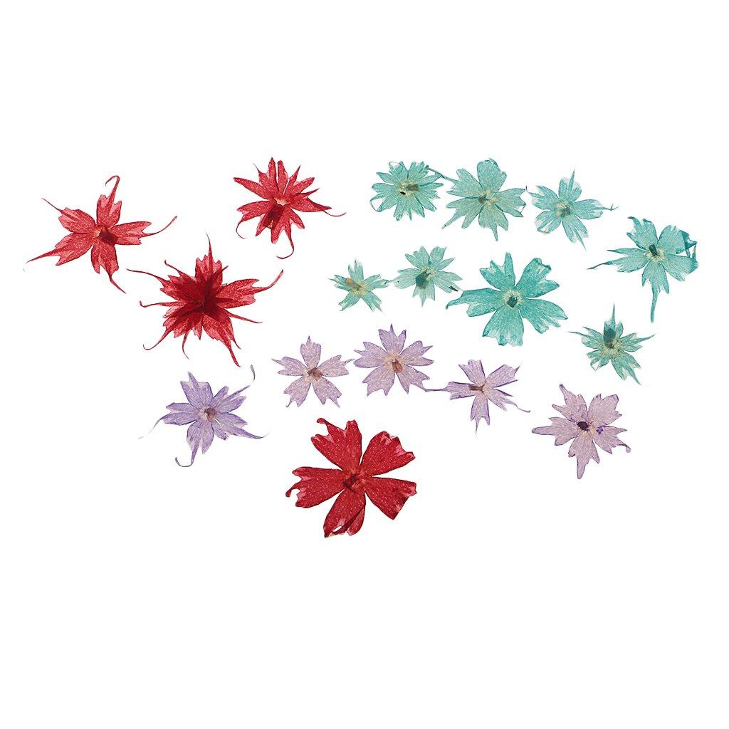 baoblaze複数のナチュラルドライフラワー、Real押しフロックスドラモンディ、ミックスリーフ、ピンクLarkspur、ミニローズ、紫陽花、デイジー、and More Real Pressedドライフラワー c5114f51d7df708cf5ec144f0397edfb B07CTBMZST 15pcs 5 - 25mm Annual Phlox