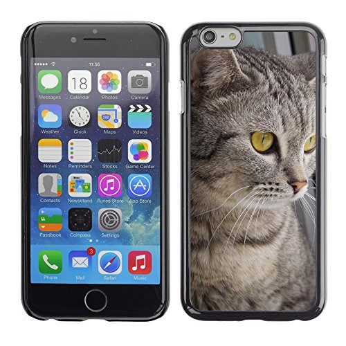 "Premio Sottile Slim Cassa Custodia Case Cover Shell // V00003122 chats 5 // Apple iPhone 6 6S 6G 4.7"""