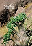 Pachypodiums in Madagascar