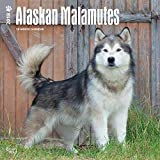 Alaskan Malamutes 2018 12 x 12 Inch Monthly Square Wall Calendar, Animals Dog Breeds
