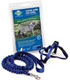 petsafe Come With Me Kitty Harness and Bungee Leash, Azul real/Azul marino, Large