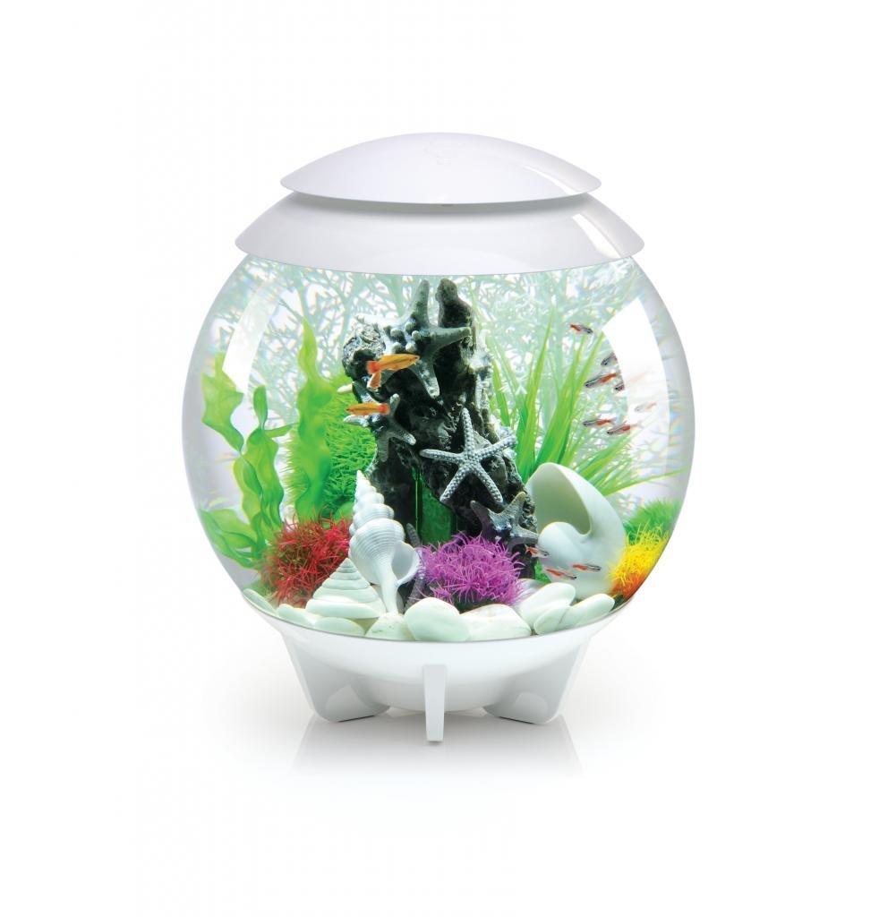 Fish Tank Biorb Halo Coldwater Fish Tank 30 Litre White Amazoncouk Pet
