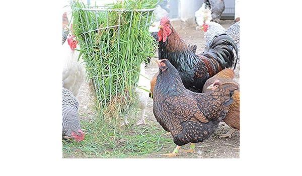 FINCA CASAREJO Comedero para gallinas y Otras Aves antiestres ...