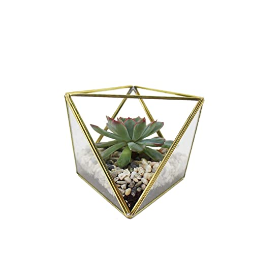 Geometrisches Terrarium Gold Geometrische Deko Glas Terrarium Mini