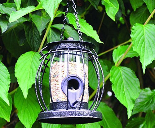 Mini Caged Seed Feeder by Kingfisher