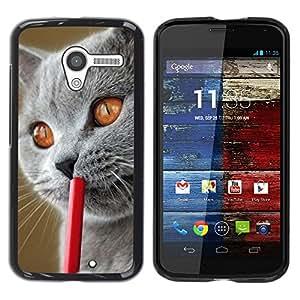 YiPhone /// Prima de resorte delgada de la cubierta del caso de Shell Armor - Blue British Shorthair Siberian Cat - Motorola Moto X 1 1st GEN I XT1058 XT1053 XT1052 XT1056 XT1060 XT1055