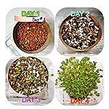 Baby Fun & Development Organic Planting Gardening Experiment Kit Kaiware Plant for Kids