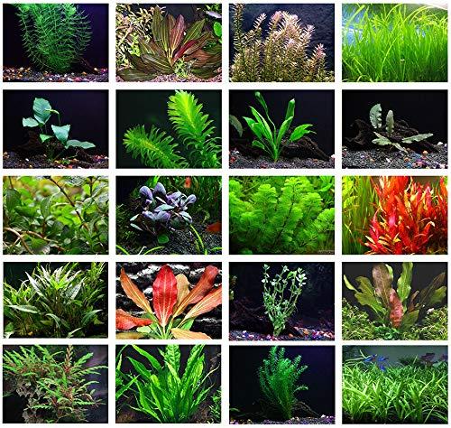 Texas Aquarium Plant Bundle - 20 Species Live Aquarium Plants Package from AquaLeaf Aquatics