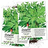 Seed Needs, Mugwort Herb (Artemisia vulgaris) Twin Pack of 1,000 Seeds Each