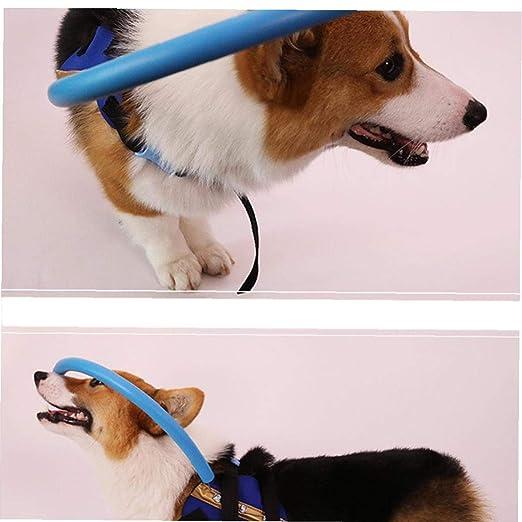 Guía ciega anti colisión Anillo de mascotas Pet Food cataratas de ...