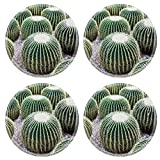 Liili Round Coasters Image ID 22091994 Echinocactus grusonii popularly known as the Golden Cactus
