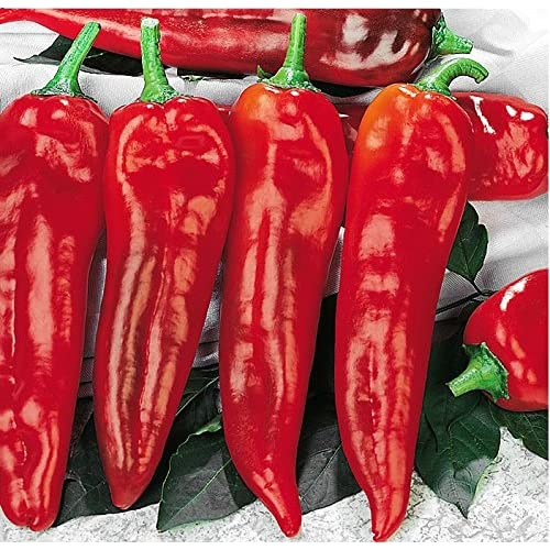 30+ ORGANICALLY GROWN GIANT Italian Marconi Rosso Sweet Red Pepper Seeds, Heirloom NON-GMO, Juicy and Delicious! From USA