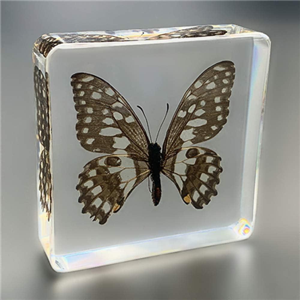 ACCP Resina de Insectos Colección de artesanías Insectos Reales Mariposa Resina Transparente Creativo Pequeños Adornos Espécimen de Insecto Juguete de observación de enseñanza de jardín de Infantes