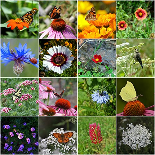 Garden Butterfly Plant (500 Butterfly Attracting Flower Mix Seeds With 25 Different Types of Flower by RDR Seeds)