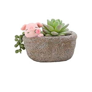 Youfui Home Decor Pot, Succulent Planter Flowerpot Decor for Home Office Desk (Rose Pig)