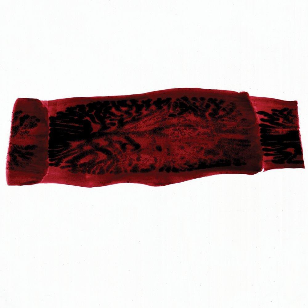 w.m Microscope Slide Taenia pisiformis Gravid Proglottids