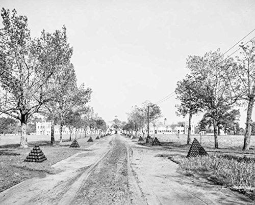 Central Avenue, U.S. Arsenal, Augusta, Ga., c1903 16in x 20in Black & White Historical - Ga The Avenue