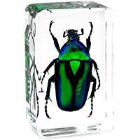 QTMY Insect in Resin Specimen Collection Paperweight for Office Desk,Christmas for Men Women Biology Science Teacher…