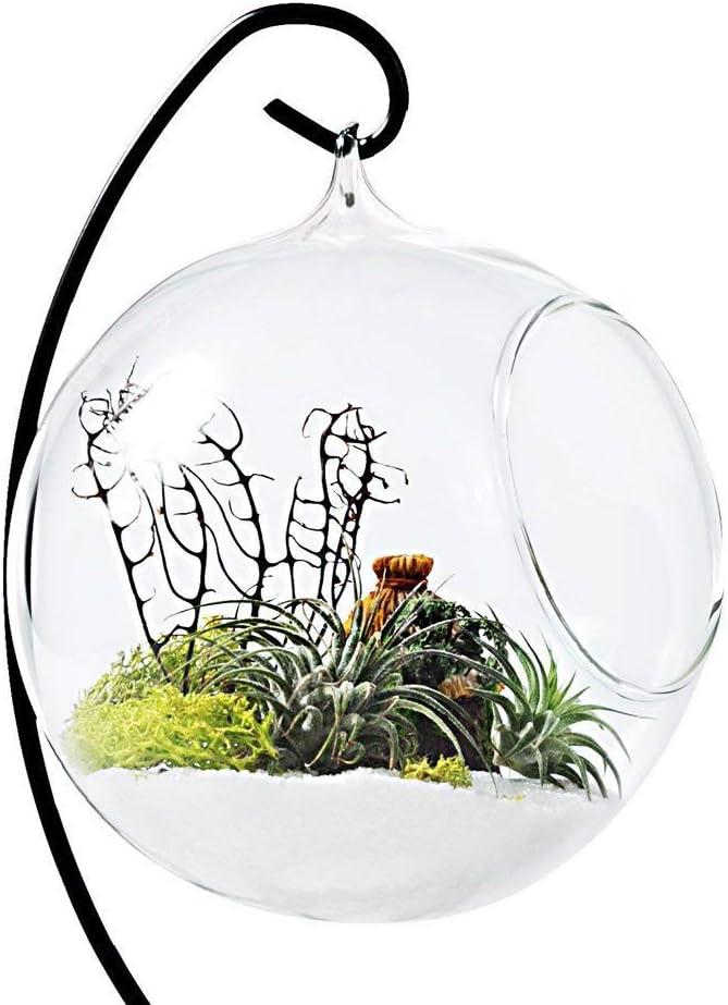 TJW Jarr/ón de cristal para colgar plantas de aire terrario Kit para suculenta helecho musgo Bonsai flor
