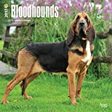 Bloodhounds - 2017 Calendar 12 x 12in