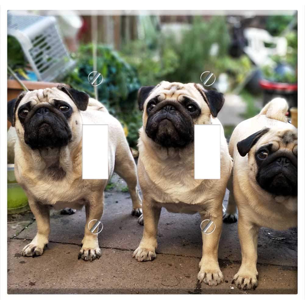 88+ Pug Dogs Cute Pics