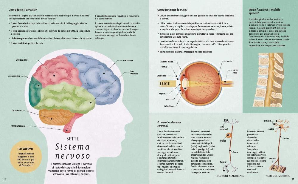 Ecco come funziona il corpo umano: Nicola Edwards: 9788873079521: Amazon.com: Books