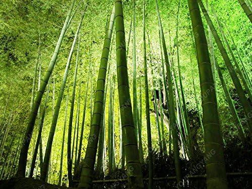 semillas de bambú 50pcs semillas Bonsai ARUNDINACEA BAMBUSA, envío libre fresco de semillas de bambú verde decoración de jardín de plantas: Amazon.es: Jardín