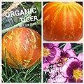 Jaysseeds Tigger Melon Seeds (Non-gmo) 50 Seeds Upc 656793277114 & Bonus Daylily Seeds
