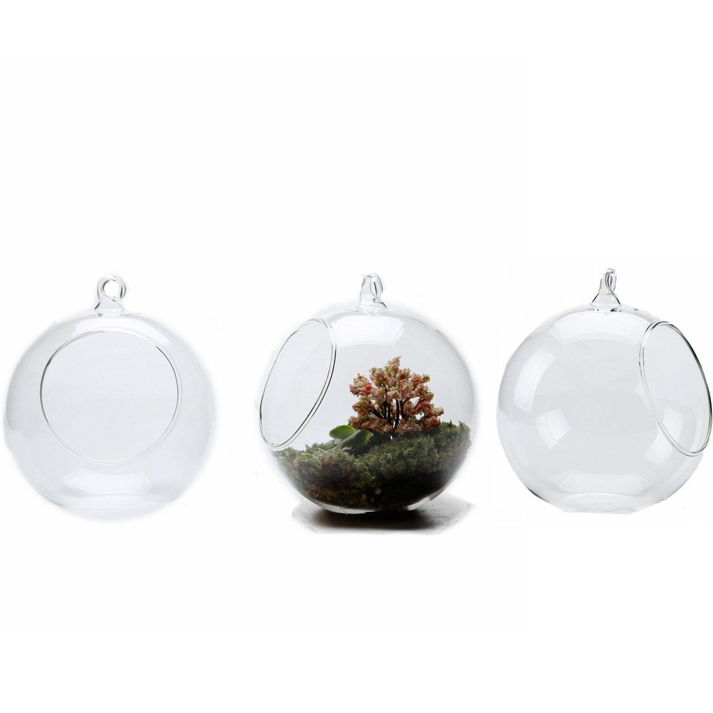 Amazon Com Hanging Glass Globe Terrarium Containers 5 25 Glass