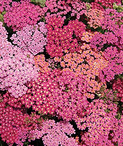 Florist Flower Cutting Garden. Daily Supply of Fresh Cut Flowers