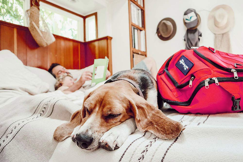 Complete Emergency Bag for Dogs - Keep Your pet Safe at Home and on The Road