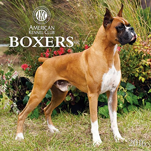 Boxers American Kennel Club 2016 Wall Calendar