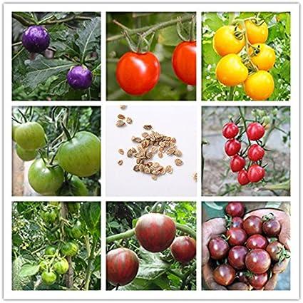 Semillas de vegetales orgánicos de Tomate Red Cherry Seeds ideales para camas y bordes, macetas de patio y contenedores - 100pcs