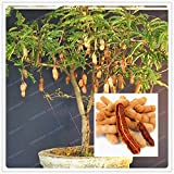 HOO PRODUCTS - 10 Particles / Bag Tamarind Seeds Bonsai Tree Seeds Home Garden Decoration Diy Plant Fruit Tree Seeds Vegetable Seeds Garden Loss Promotion!