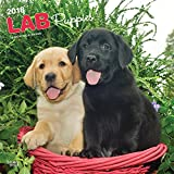 Labrador Retriever Puppies 2018 12 x 12 Inch Monthly Square Wall Calendar, Animals Dog Breeds Retriever Puppies Canine (English and French Edition)