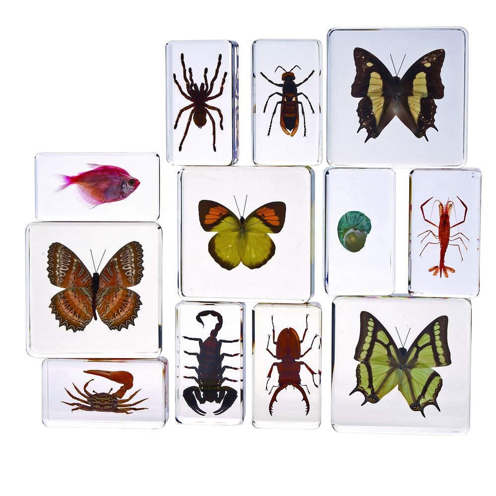 Excellerations Acrylic Specimens Science Collection - Set of 12 (Item # ACSET1)