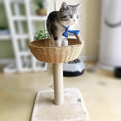 Gato, Árbol Del Gato Del Marco Que Sube Gato Que Rasguña El Gato De ...