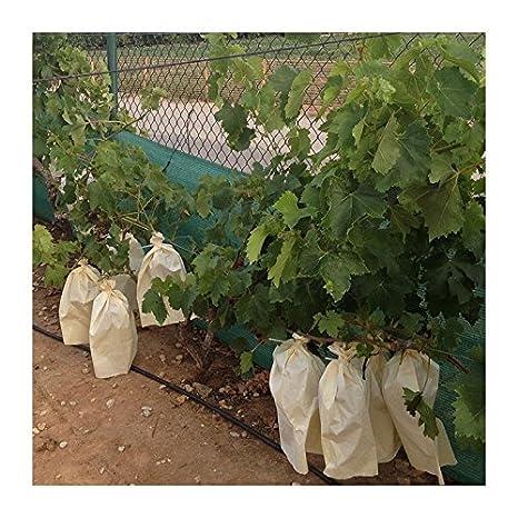 Tecnologías Agrarias 100 Bolsas Protectoras para Uvas (40 cm x 26 cm): Amazon.es: Jardín
