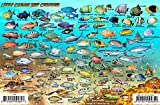 Little Cayman Island Dive Map & Reef Creatures Guide Franko Maps Laminated Fish Card