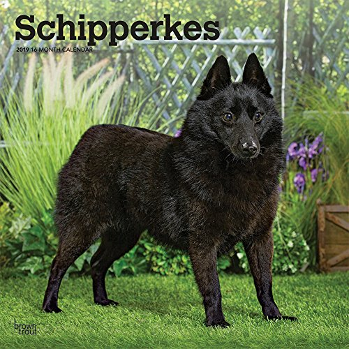 Schipperkes 2019 12 x 12 Inch Monthly Square Wall Calendar, Animals Dog Breeds (Multilingual Edition)