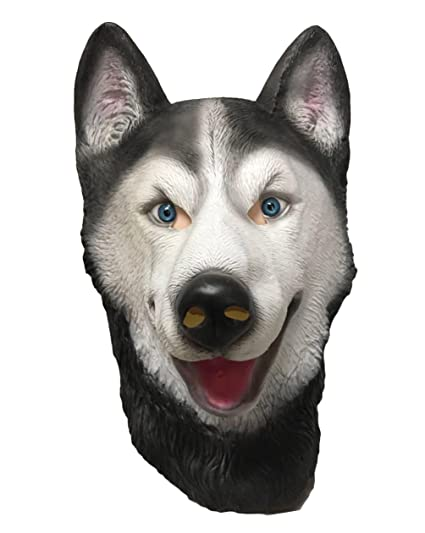 Amazon.com  Husky Dog daa059365