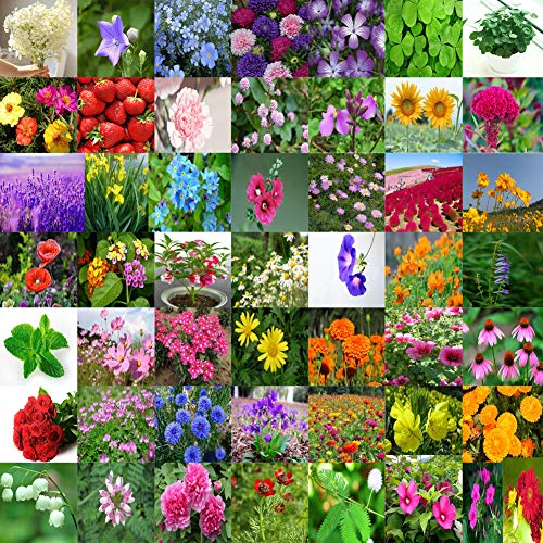 Flower Seed Needs Bulk Package of 50 Varieties Wildflower Mixture Sunflower Non-GMO Seeds (Best Time To Plant Seeds For Flowers)