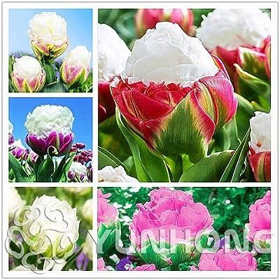 GRENFAS_2Pcs Tulip Bonsai Rare Bonsai Flower Bonsai Ice Cream As Beautiful Tulips Potted Perennial Home Gardens Tulip (Bonsai) - (Color:Mix): Garden & Outdoor