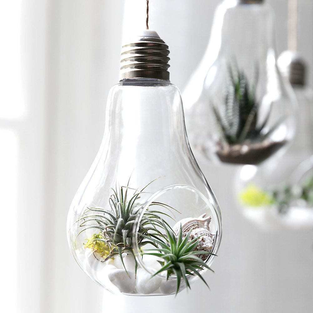 Jring Light Bulb Terrarium 3pack Glass Hanging Terrariums Light