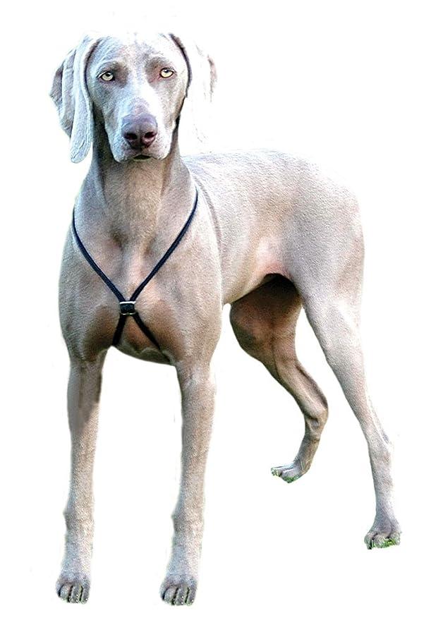 The Company of Animals Halti: Amazon.es: Productos para mascotas