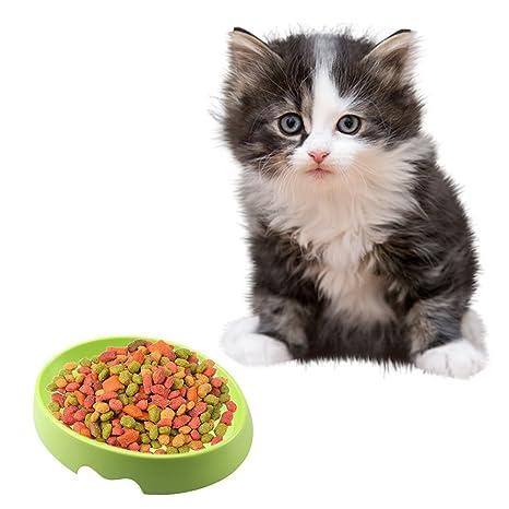 Somedays - Cuenco de comida antideslizante para gato o gato ...