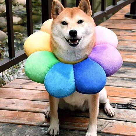XXDYF Collar de recuperación para Perros, Ajustable Collar ...