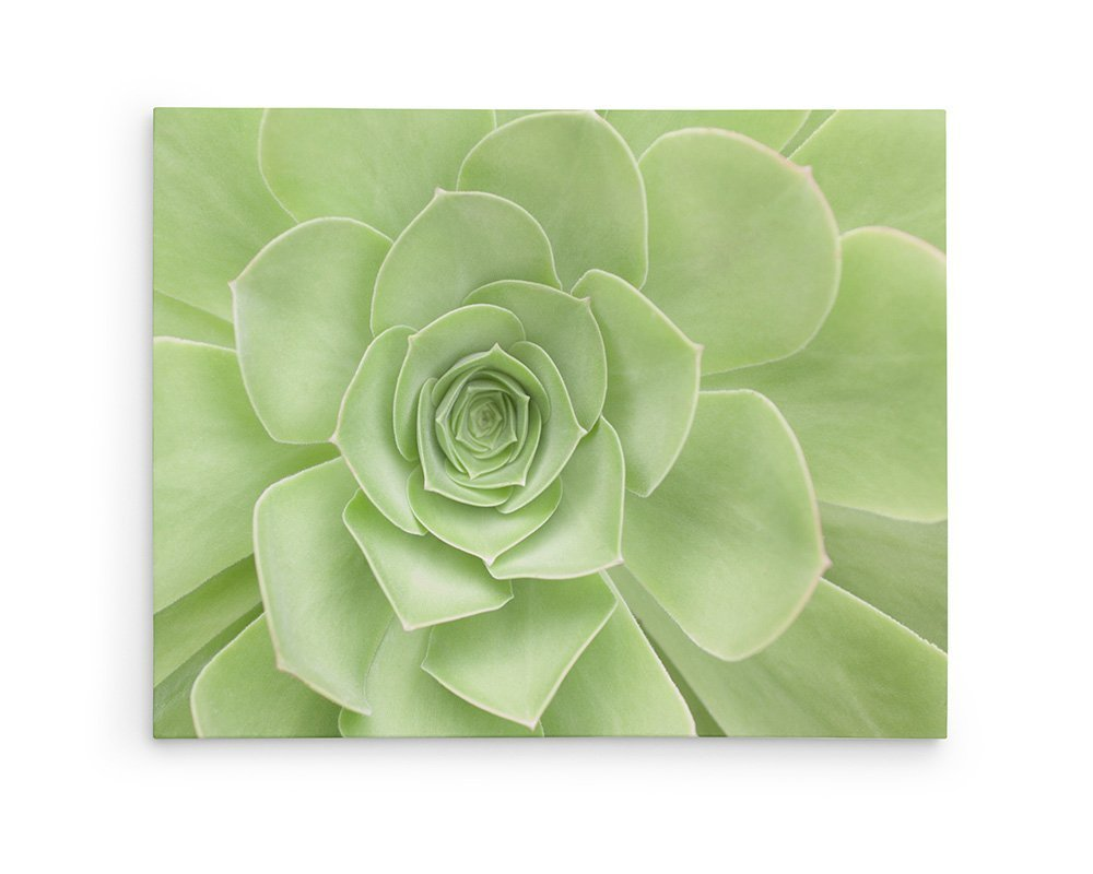 Large Format Prints, Canvas or Unframed, Botanical Decor, Sage Green Floral Wall Art, 'Succulent Heart'