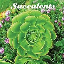 Succulents 2019 Calendar