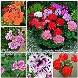 20 Pz * Piante Borsa geranio giardino semi di fiori Pelargonium Decorazione Esterni Casa Flores Seed vaso bonsai fiori economici
